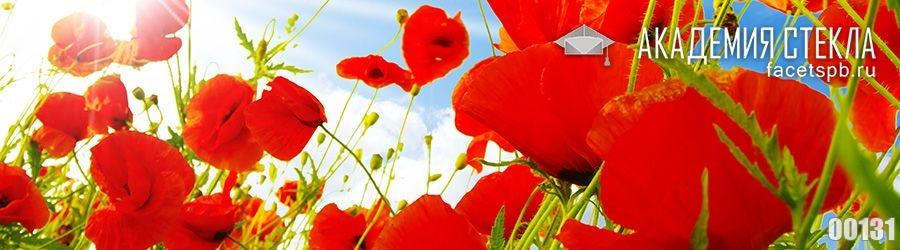 Фото для фартука красные красные маки