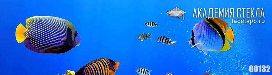 фото для фартука под водой