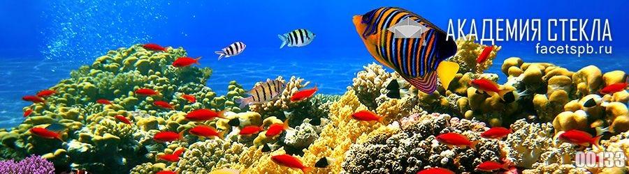 фото для фартука в океане