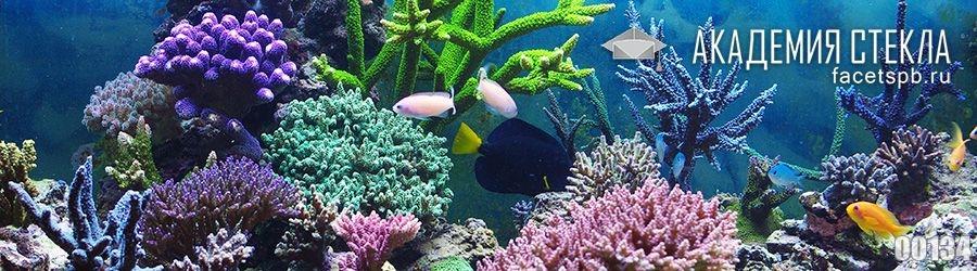 фото для фартука коралловый риф