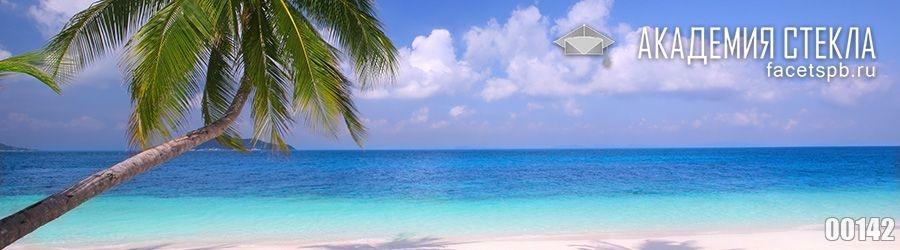 фото для фартука из стекла пальмы на берегу