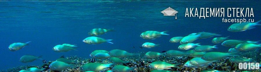 фото для фартука рыбки под водой