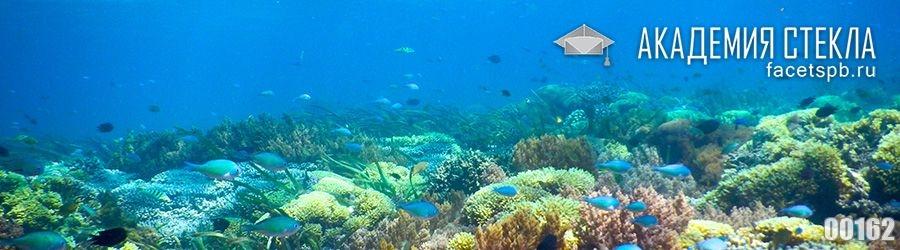 фото для фартука океан под водой