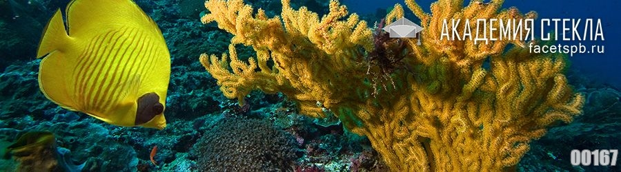 фото для фартука коралл