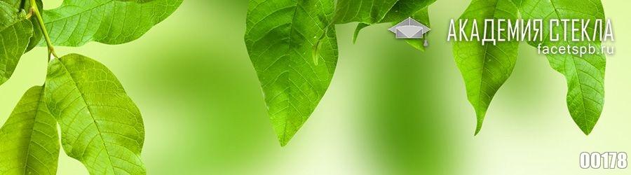 Фото для фартука зелёные листья