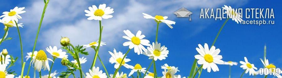 Фото для фартука ромашки и небо