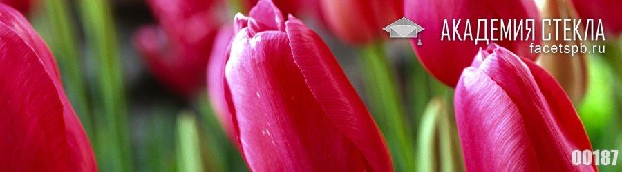 Фото для скинали тюльпаны