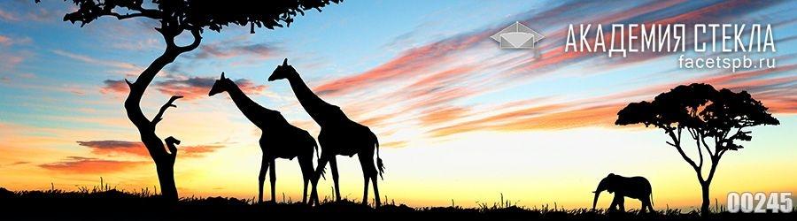 фото для фартука закат в Африке