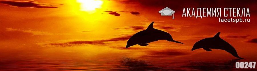 фото для фартука закат и дельфин