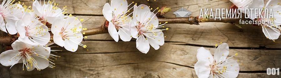 Фото для фартука цветы абрикоса