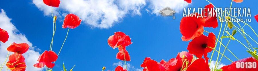 Фото для фартука красные маки и небо