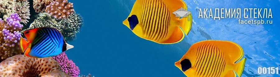 фото для фартука жёлтые рыбки в море