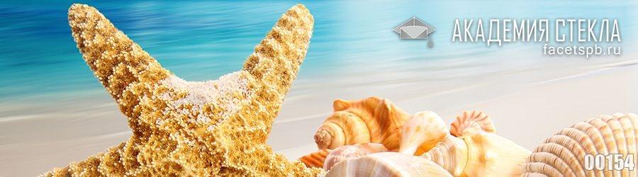 фото для фартука ракушки на берегу моря