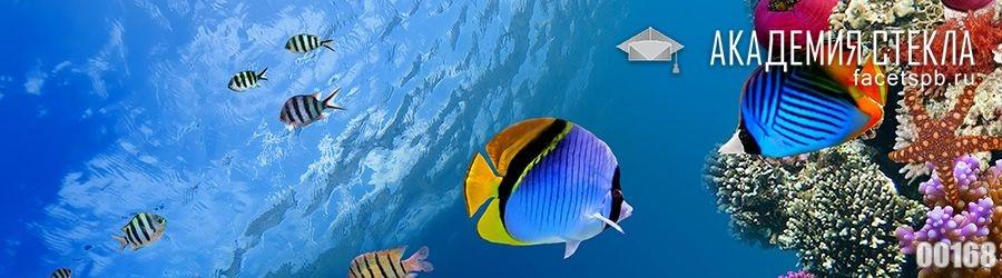 фото для фартука рыбка в море