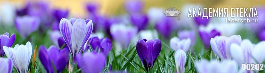 Фото для фартука цветы