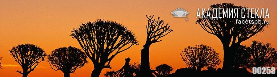 фото для фартука закат деревья