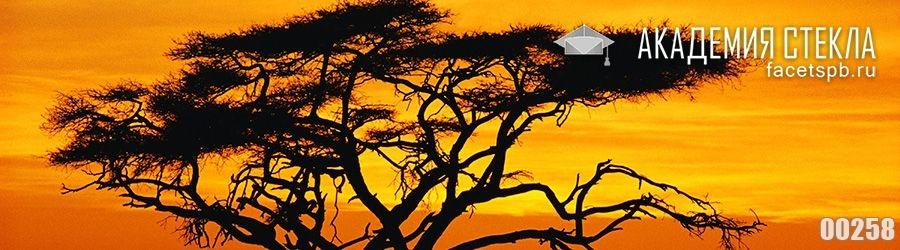 фото для фартука дерево закат